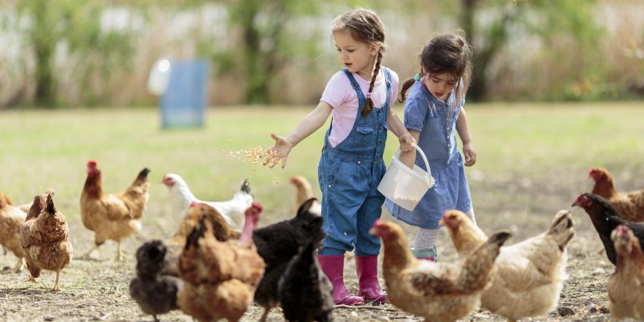 Zwei Kinder füttern Geflügel